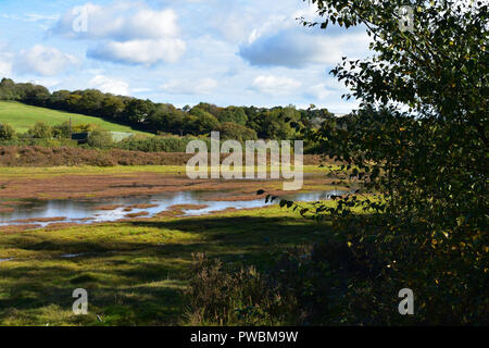 Carnon Valley Nature Reserve - Stock Image