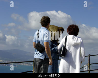 Gibraltar Ape Sitting on Woman s Head Gibraltar Ape Sitting on Woman s Head  Barbary Macaque Macaca sylvanus L ape apes monkeys - Stock Image