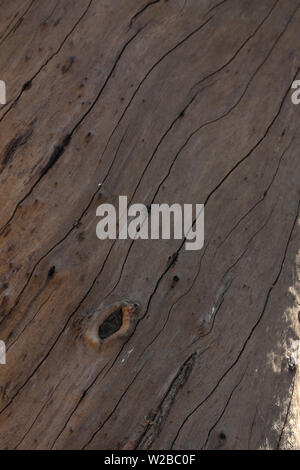 Uniform natural wood texture random lines of stem of tree for background - Stock Image