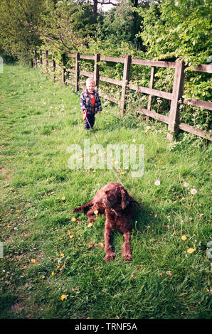 Two year old boy walking a brown Labradoodle dog , Medstead, Alton, Hampshire, England, United Kingdom. - Stock Image