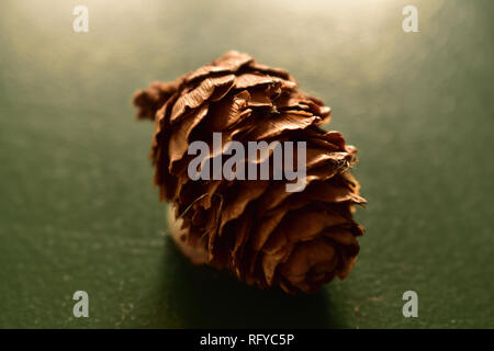 Close up of a pine cone - Stock Image