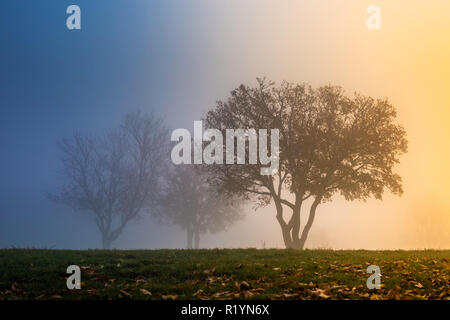 Budapest, Hungary - Beautiful blue and orange foggy morning at top of Gellert Hill with trees on the field at sunrise - Stock Image