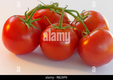 Group of five round red tomatoes on the vine on a white background. - Stock Image