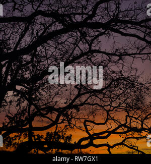 Autumn Tree Branches Silhouette at Sunset - Stock Image