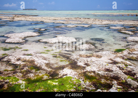 Zanzibar, Matemwe. Mnemba Island is seen in the distance, across the rock pools revealed by the low tide. - Stock Image