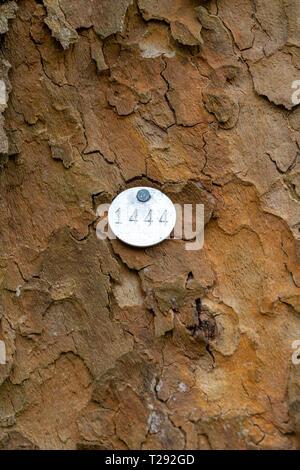 Tree identification number tag - Stock Image
