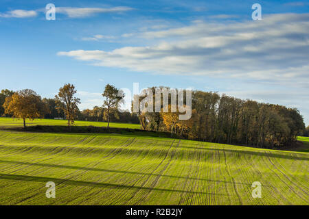 Trees and farmland in Autumn, France. - Stock Image