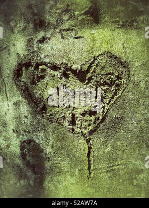 Heart Shape Carved In To A Tree. - Stock Image
