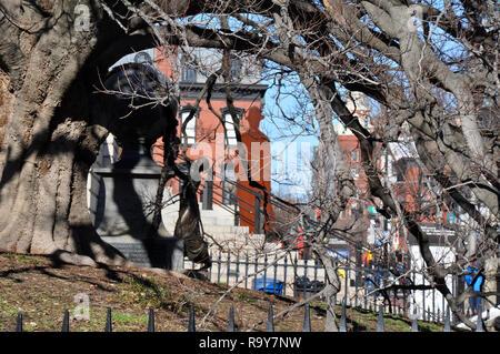 Old Tree outside National Portrait Gallery Washington DC - Stock Image