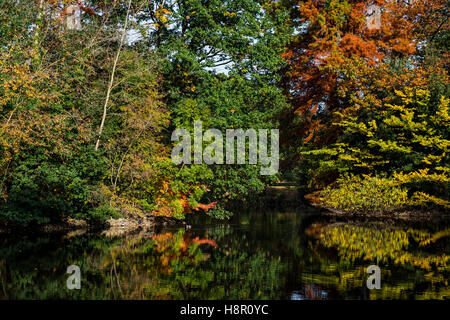 Autumn view of trees and bushes reflected in lake - Stock Image