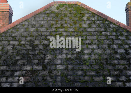 A house roof in Cornwall with moss growing . - Stock Image