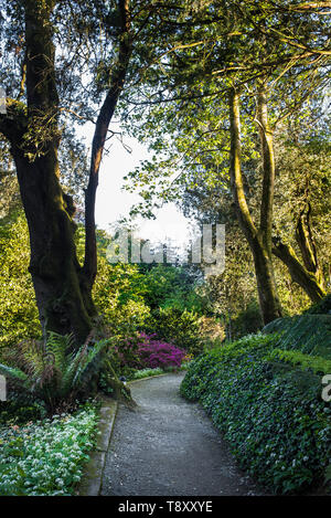 Evening light over a footpath in Trebah Garden in Cornwall. - Stock Image