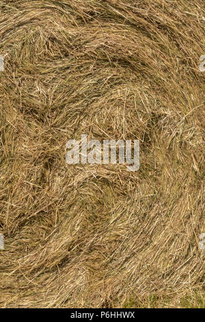 Centre swirls of hay in a round hay bale. Needle in a Haystack metaphor. - Stock Image