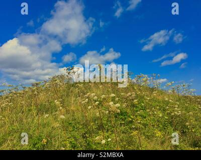 Hill with wildflowers and puffy white clouds - Stock Image