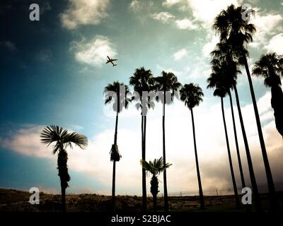 Palm trees close to LAX international airport on Los Angeles, California, USA - Stock Image