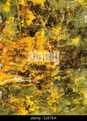 Yellow Lichen on a wall - Stock Image
