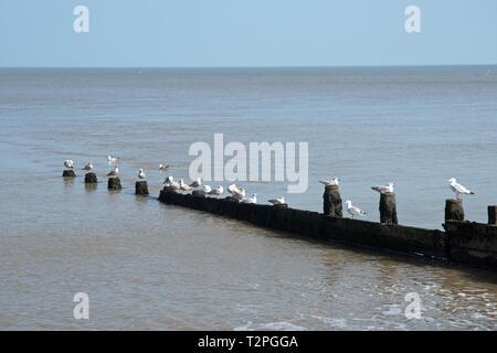 Groynes on Cromer beaches, Norfolk, UK - Stock Image
