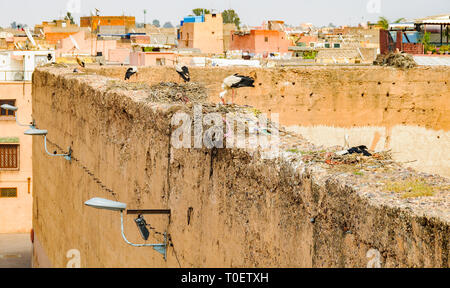Stork nests in the Medina of Marrakech, Morocco - Stock Image