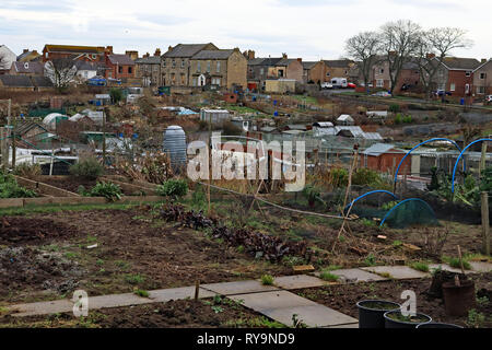 Allotments West Avenue Amble Amble is a small town on the north east coast of Northumberland in North East England. Cw 6651 - Stock Image