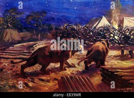 The foe of the Railway builder in Uganda Central Africa. Lion attacks at one time stopped work circa 1910 - Stock Image