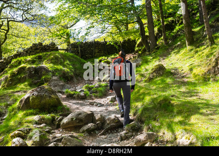 A female hiker walking through the woods near Alisongrass Hoghouse near Stonethwaite in the Lake District. - Stock Image