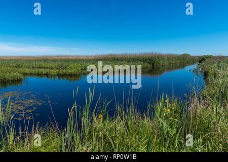 NSG or nature reserve 'Delver Koog' Eider, at the Eider-Treene-Sorge-Niederung, Delve, Dithmarschen, Schleswig-Holstein, Germany, Europe - Stock Image