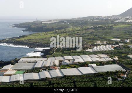 banana plantations tenerife canary islands plantation agriculture canaries isles growing bananas crop crops exports - Stock Image
