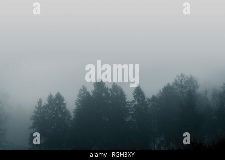 Misty forest scenery with pine treetops covered with fog in a moody moment - Stock Image