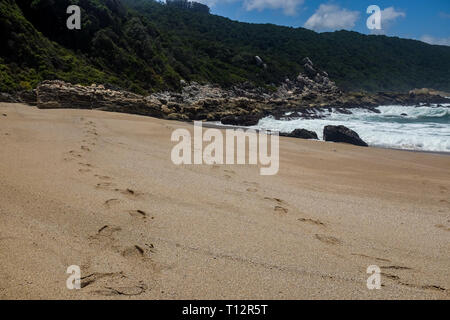 Footprints along an empty beach by Indian ocean along the Otter Trail, South Africa's most famous and beautiful hiking trail in the Western Cape - Stock Image