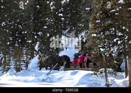 Winter Sleigh Rides Alberta Canada Lake Louise - Stock Image
