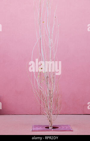 Leafless Tree With Pink Planter Grating - Stock Image