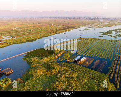 Myanmar (Burma), Shan State, Inle Lake, Kela Floating Gardens (aerial view) - Stock Image