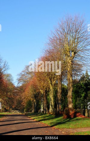 Avenue of trees bathed in winter morning sunlight, Heythrop, near Chipping Norton, Oxfordshire - Stock Image