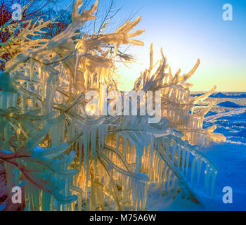 Ice-covered trees along Lake Erie, Cedar Point National Wildlife Reguge, Lake Erie, Ohio, Ice-encrusted branches - Stock Image