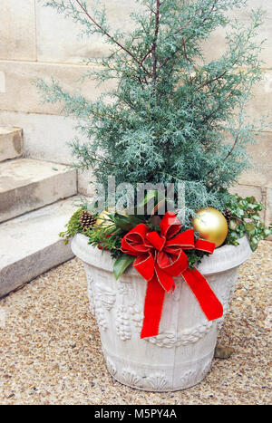 Christmas planter with Juniper bush - Stock Image