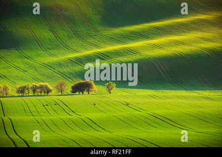 Roe deers and sunset lines and waves in the spring - Stock Image