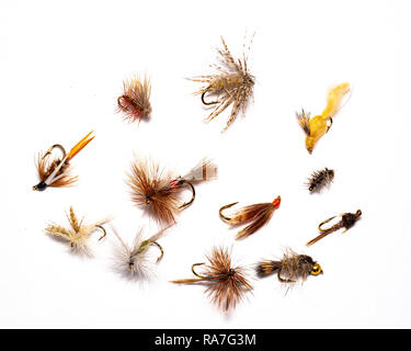A selection of a dozen wet and dry flies designed for fly fishing for trout. - Stock Image