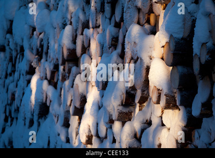 Snow covered spruce ( picea abies ) log pile - Stock Image