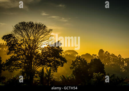 foggy forest in Sunlight Rays - Stock Image
