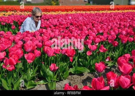 Woman looking in the Fields of Tulips in Holland specially grown for their famous bulbs - Stock Image