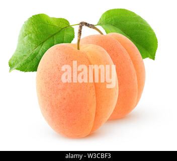 Isolated apricots. Two apricot fruits on a branch with leaves isoated on white background with clipping path - Stock Image