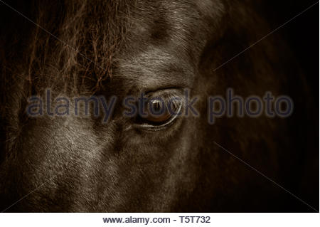 Horses do not lie - Stock Image