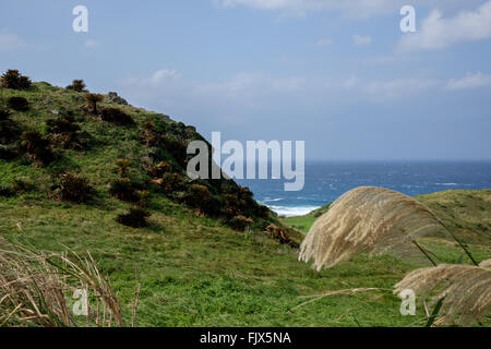 Cliff By Sea With Grass On Foreground - Stock Image