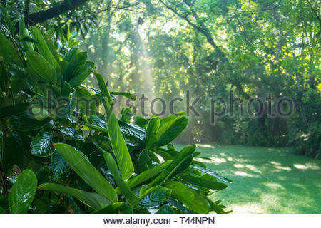 Tropical garden in Costa Rica - Stock Image