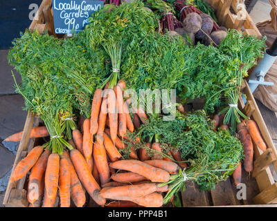 Fresh locally grown carrots in a greengrocery in Thirsk North Yorkshire England priced 99p per pound - Stock Image