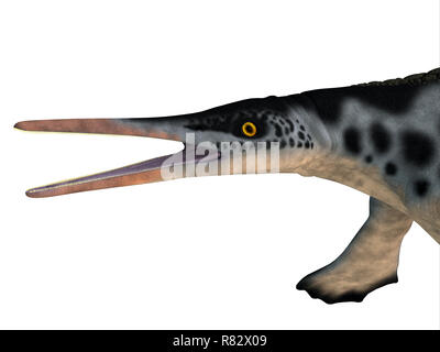 Hupehsuchus Reptile Head - Hupehsuchus was an Ichthyosaur marine reptile that lived in China during the Triassic Period. - Stock Image