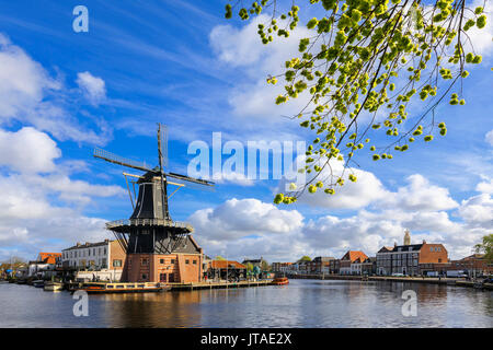 Tree branches frame the Windmill De Adriaan reflected in a canal of the River Spaarne, Haarlem, North Holland, The Netherlands - Stock Image