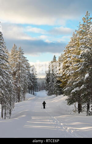 The tracks of a cross country skier are leading down a snow covered forest lane. - Stock Image
