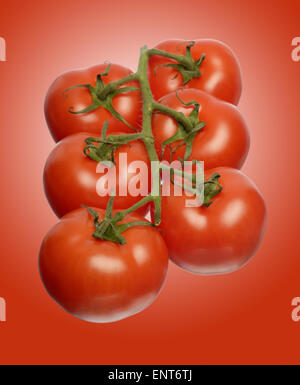 Vine Tomatoes on red background - Stock Image