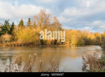 The River Nene, on the verge of flooding after heavy rainfall, at Ferry Meadows, Peterborough, Cambridgeshire, England - Stock Image